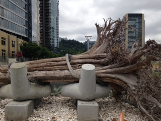 Portland, sometimes referred to as Stumptown, has created public art out of a stump that washed down the river.