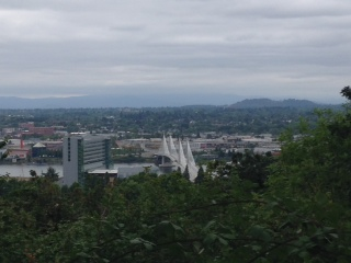 Terwilliger Boulevard viewpoint overlooking the Tillikum Crossing bridge.  Mount Hood is hidden by clouds.  The clouds gave the walkers relieve from the recent heat wave.