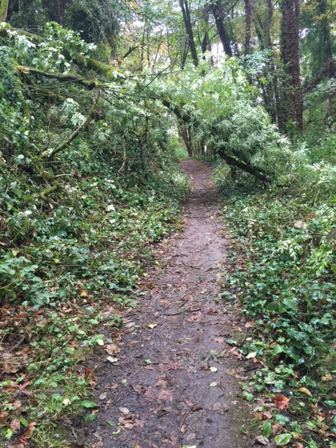 Path cut through the fallen tree.