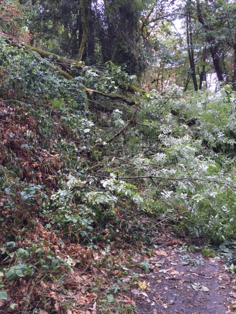 Tree blocking Trail 3