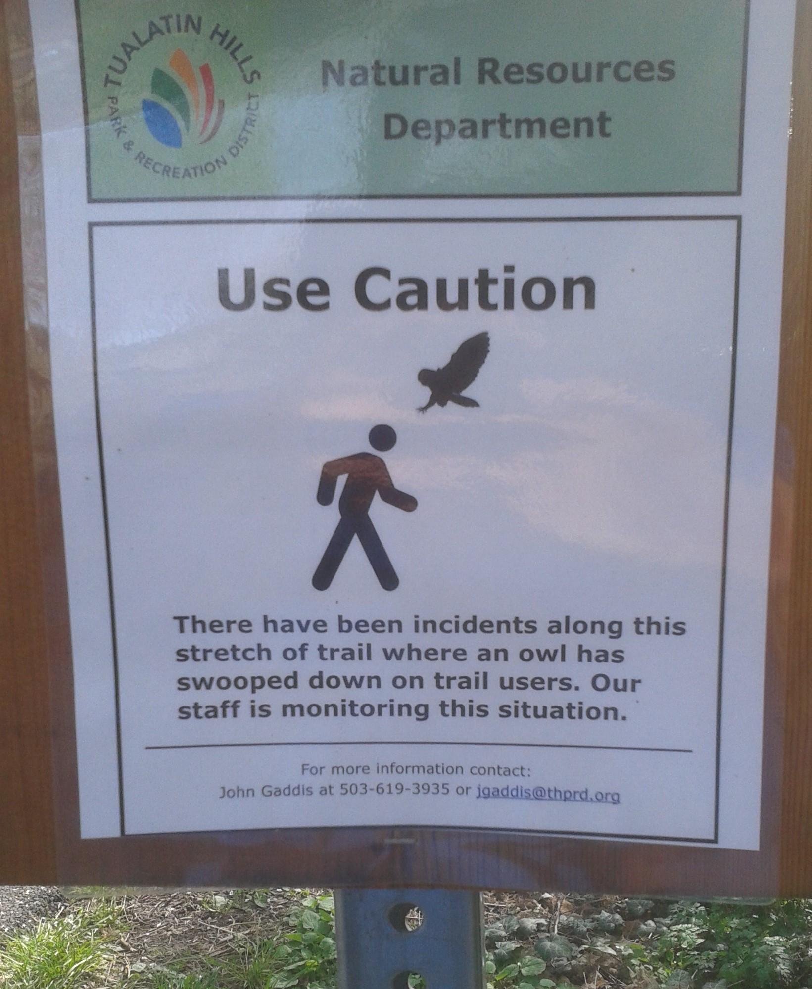 Beware of owl