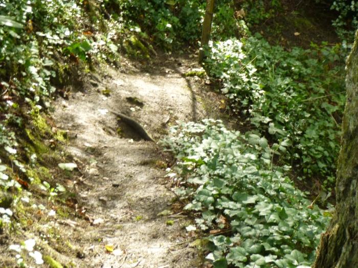 2014_4_4_Steep_Trail_SW_25th_down_to_creekbd8ef9