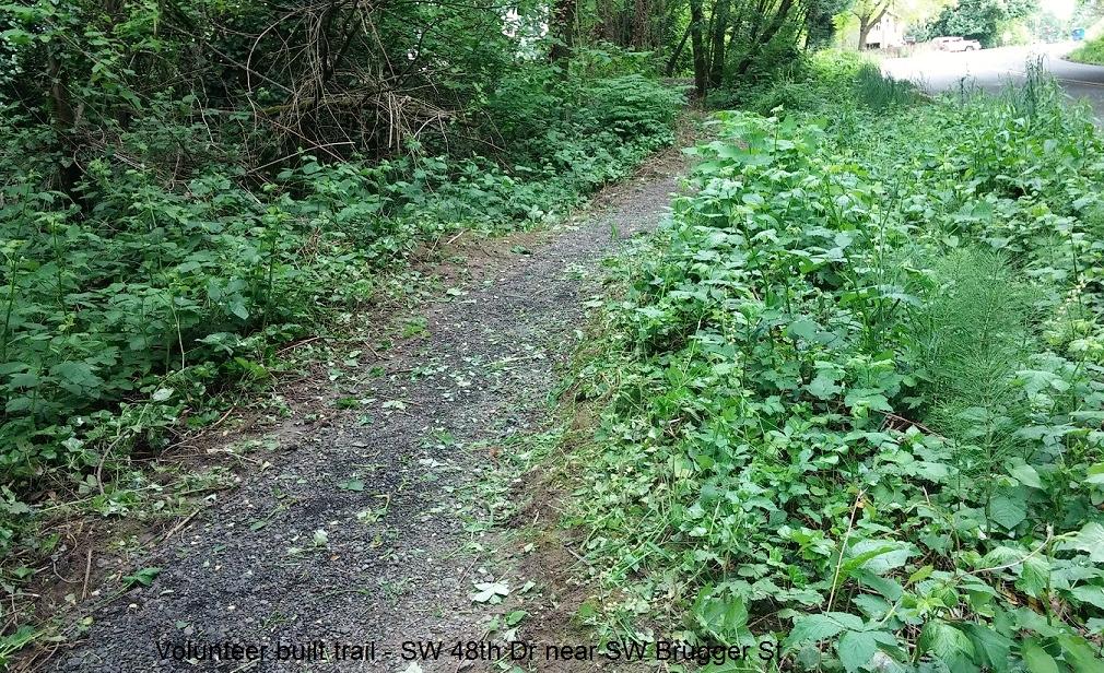 volunteer built trail in Woods Park
